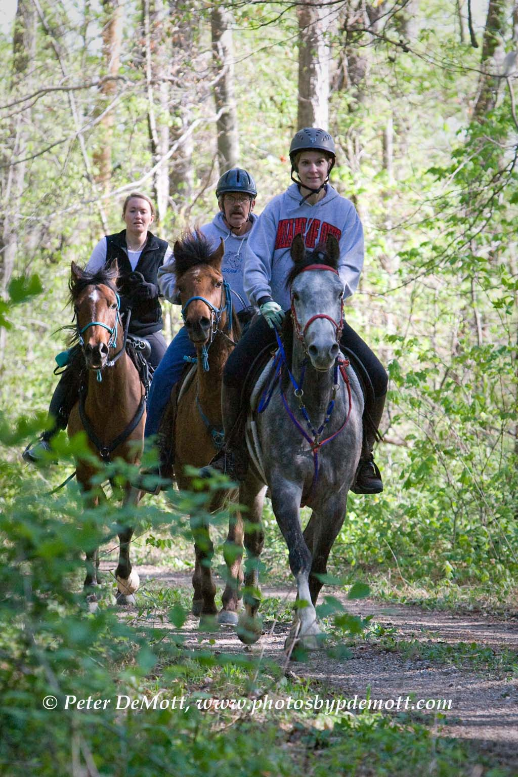 henryville tornados and clark state forest horse trails