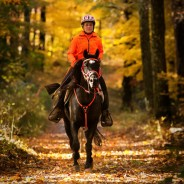 SPOOK RUN AERC Endurance Ride with Appaloosa Nationals November 1 & 2, 2013