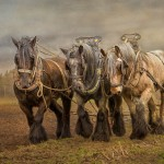 Interview with Frederick Van Johnson of TWIP: This Week In Photography about Equine Photography